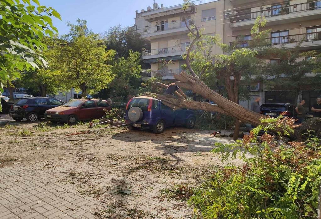 Δέντρο καταπλάκωσε 4 αυτοκίνητα στη Θεσσαλονίκη (ΦΩΤΟ)