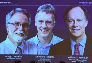 Στους Γουίλιαμ Κέιλιν, Σερ Πίτερ Ράτκλιφ και Γκρεγκ Σεμένζα το Νομπέλ Ιατρικής