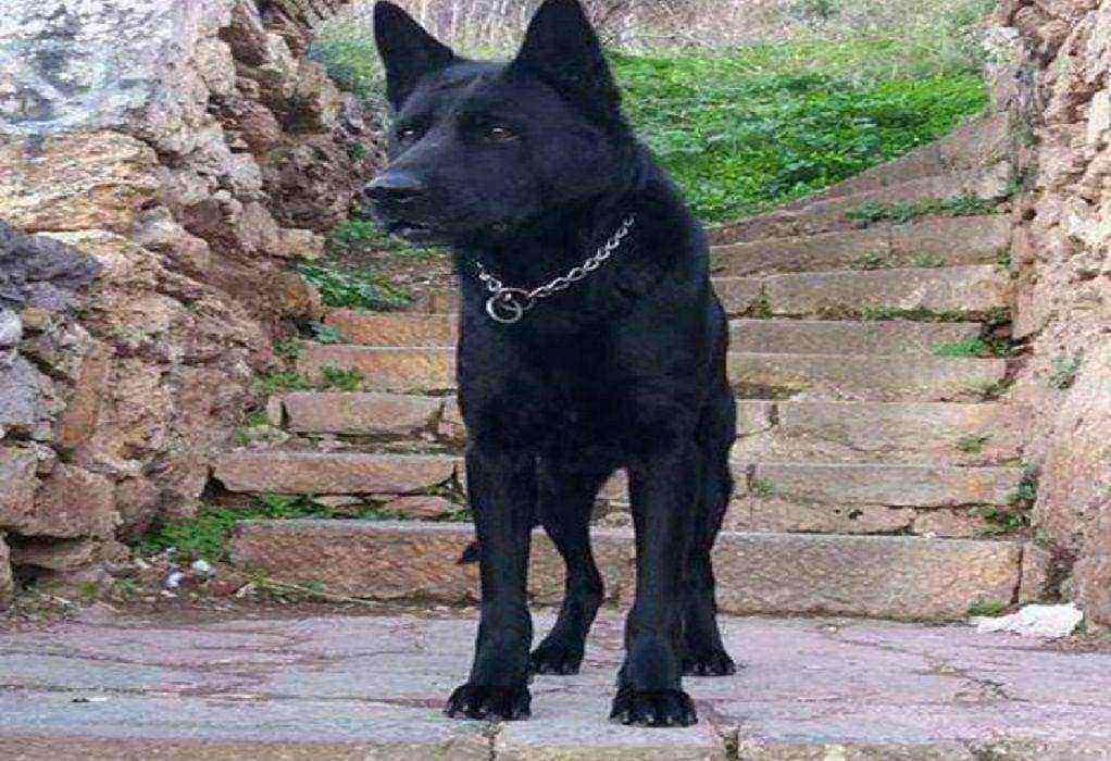 ΕΛΑΣ: To συγκινητικό «αντίο» στον αστυνομικό σκύλο Blacky