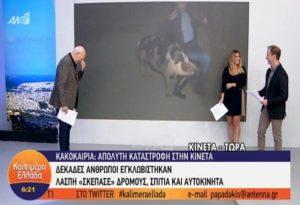 Επικό βίντεο -Γουρούνι κυνηγούσε ρεπόρτερ!