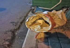 Καβάλα: Πέταξαν κουτάβια στα σκουπίδια (ΦΩΤΟ)