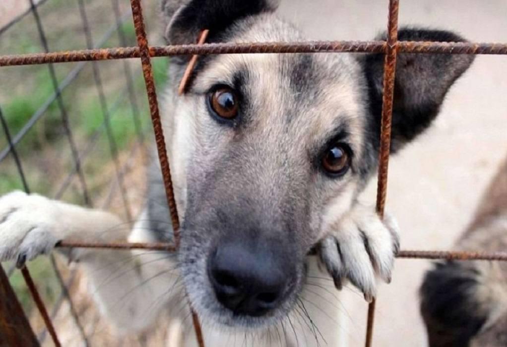Βορίδης: 600.000 ευρώ σε δήμους για καταφύγια αδέσποτων ζώων