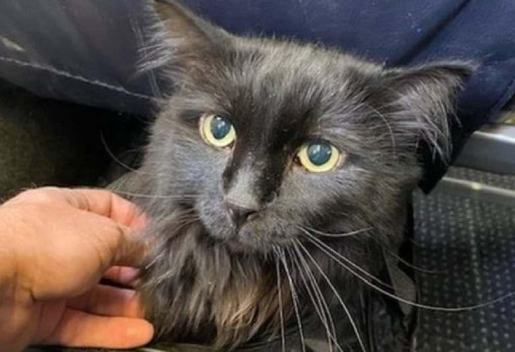 ΗΠΑ: Γάτος που αγνοούνταν βρέθηκε πέντε χρόνια μετά!