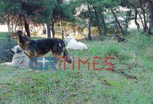 11ο Γυμνάσιο-Λύκειο Θεσσαλονίκης: Σκυλιά δάγκωσαν μαθητές (ΦΩΤΟ)