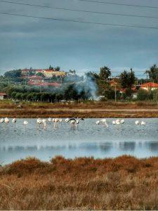 Θεσσαλονίκη: Με μολύβδινα σκάγια στο στομάχι βρέθηκαν τέσσερα φλαμίνγκο (ΦΩΤΟ)