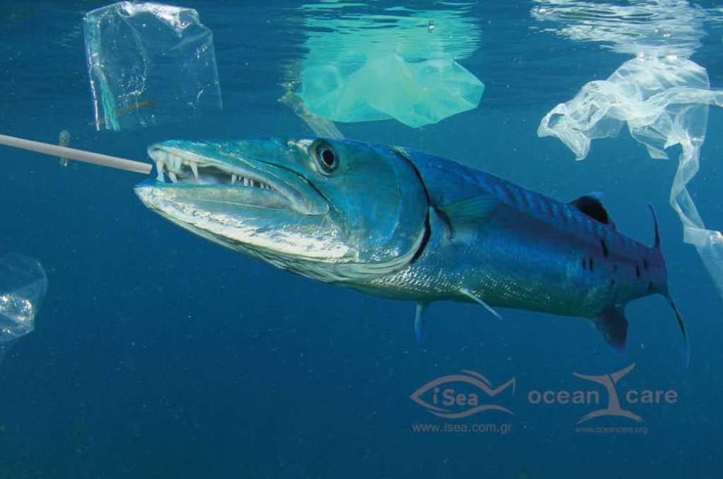 Περισσότερα πλαστικά από ψάρια στις θάλασσες έως το 2050
