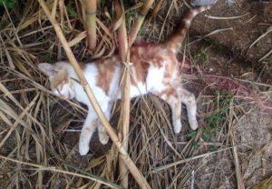 Μύκονος: Νεκρές γάτες από φόλες