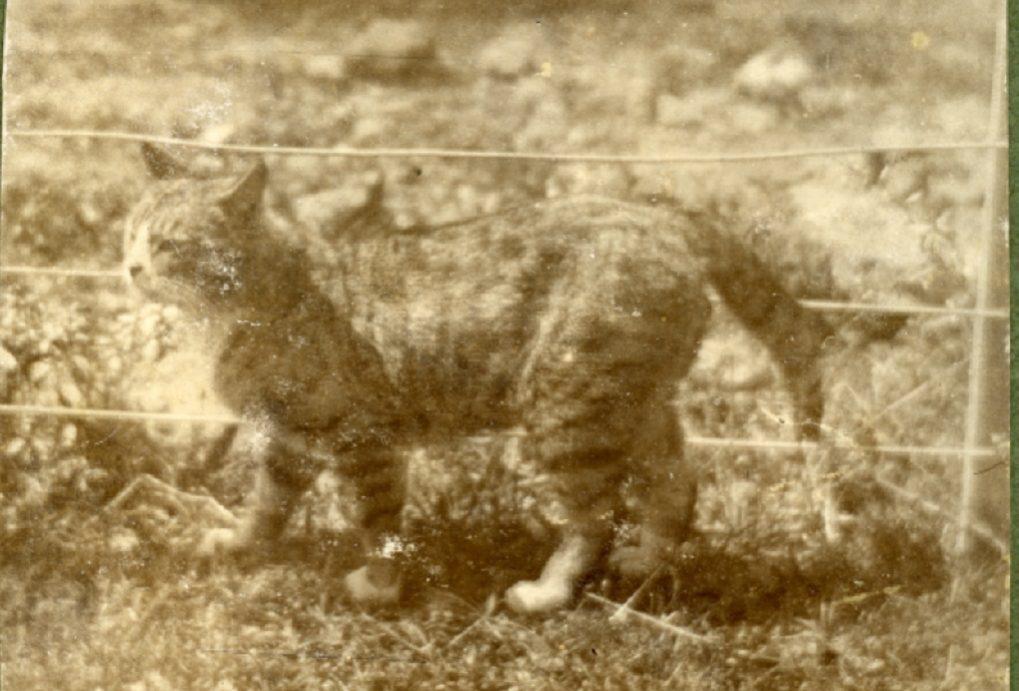Ηφαίστειο Γουάιτ: Όταν ο γάτος Πέτρος ο Μέγας, ήταν ο μοναδικός επιζών