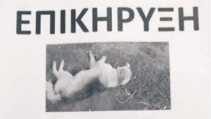Αμφιλοχία: Επικήρυξαν αυτόν που σκοτώνει σκύλους