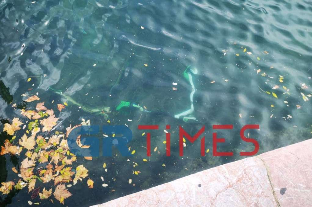 Τα πατίνια έγιναν… υποβρύχια στη Θεσσαλονίκη (ΦΩΤΟ – VIDEO)