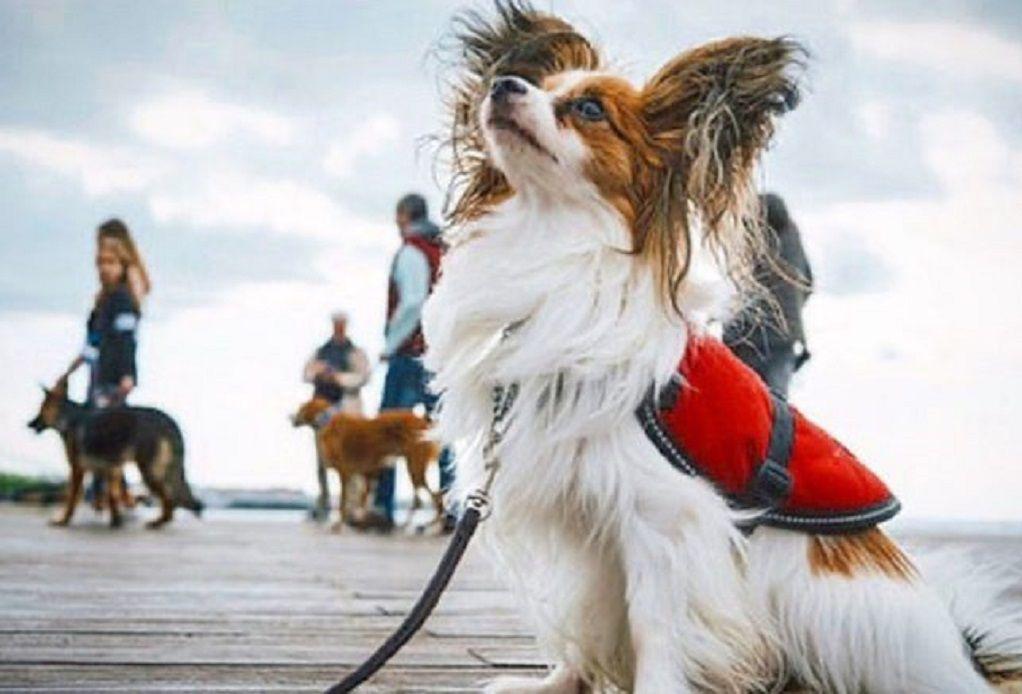 Σκύλος φύλακας-άγγελος για γυναίκα με κώφωση