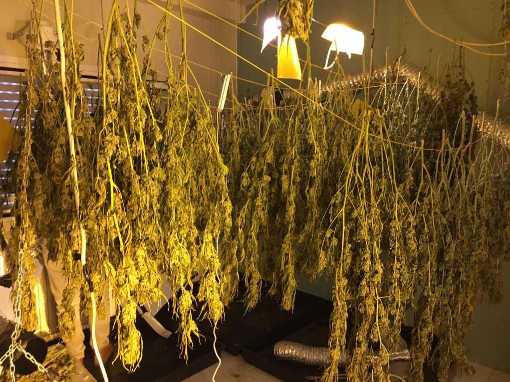 Σύλληψη σπείρας για καλλιέργεια και κατοχή ναρκωτικών (ΦΩΤΟ)