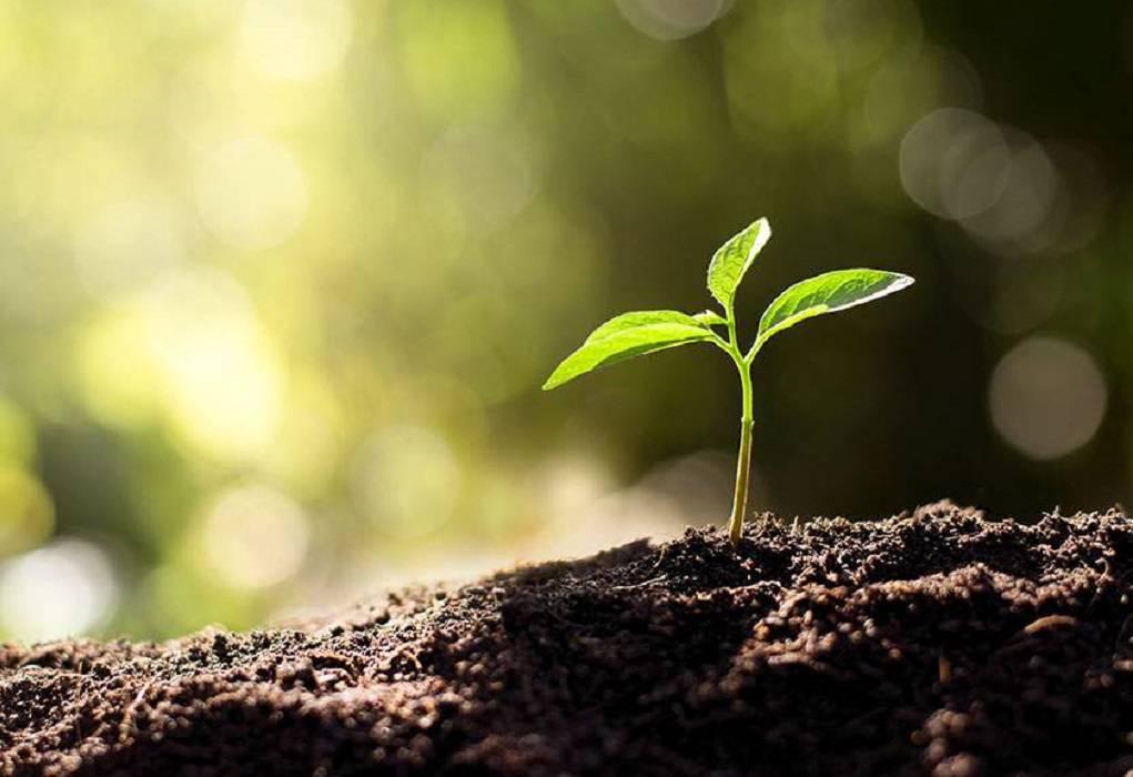 Τα φυτά… ουρλιάζουν όταν στρεσάρονται, υποστηρίζουν ερευνητές