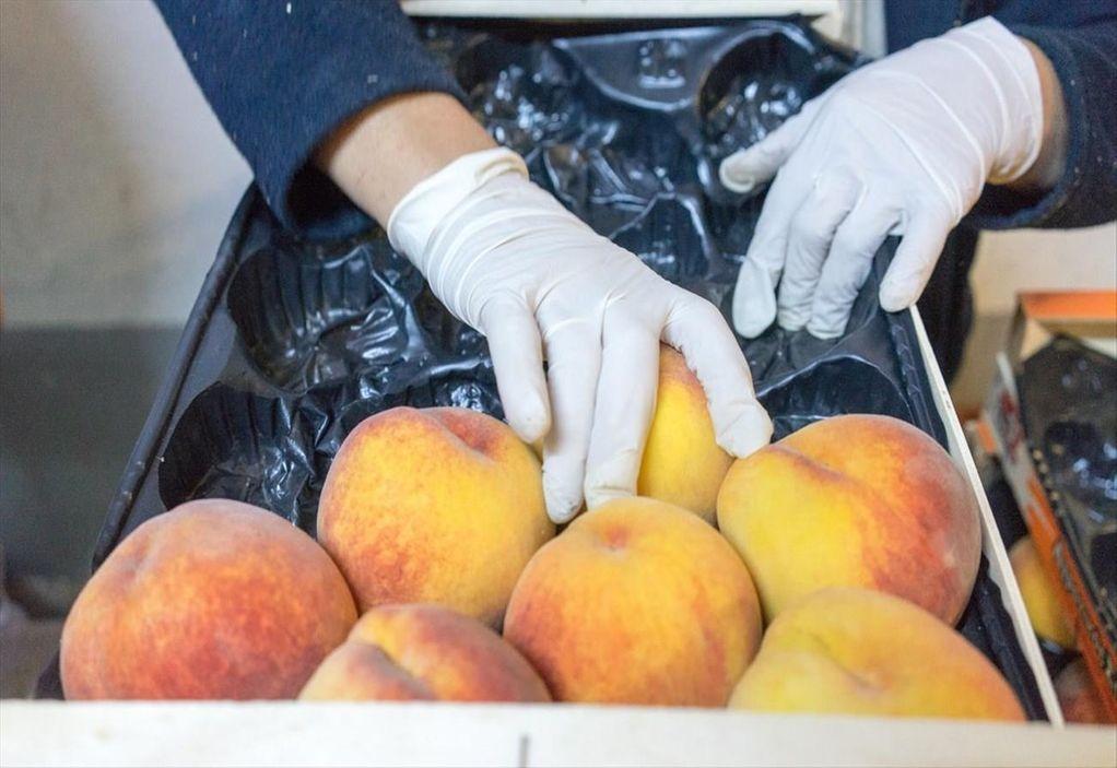 ΠΚΜ: Βαθύ πλήγμα για τις βιομηχανίες μεταποίησης η αγροτική καταστροφή