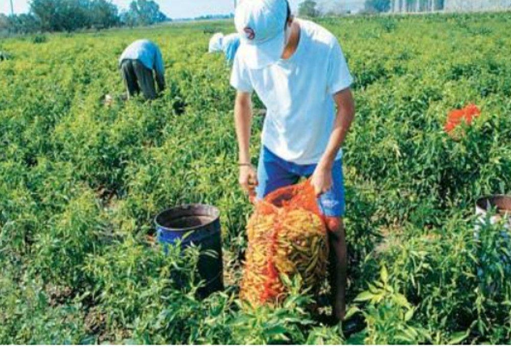 Ξεκινά σήμερα η πληρωμή Βασικής ενίσχυσης αγροτών
