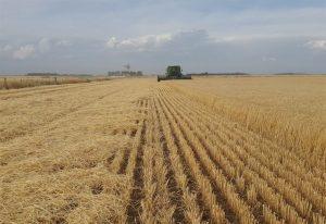 Βέροια: Διεθνές Συνέδριο για τις Καινοτόμες Αγροδιατροφικές Συνεργασίες