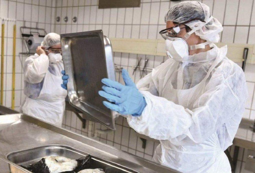 Επανεμφάνιση της γρίπης των πτηνών στην Τσεχία
