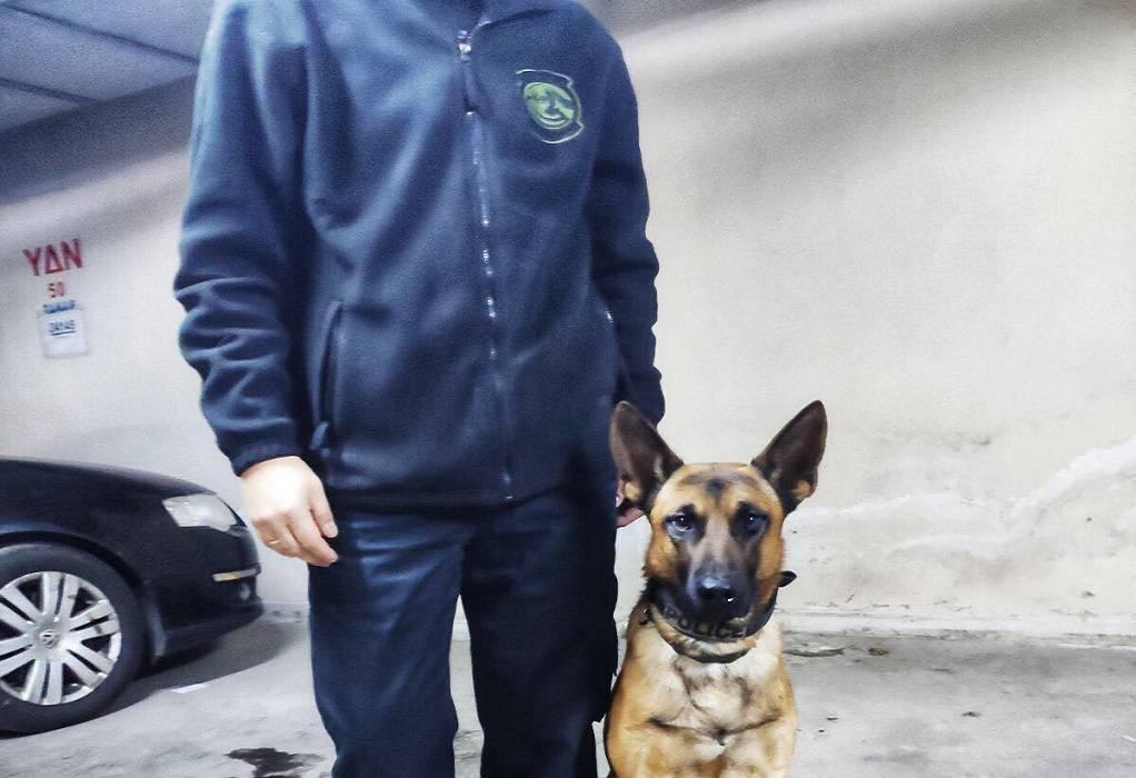 αστυνομικοι-σκυλοι-3