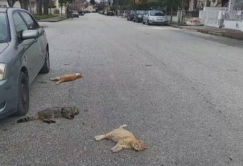 Κτηνωδία στα Τρίκαλα: Πάνω από 20 γάτες νεκρές από φόλες (VIDEO)