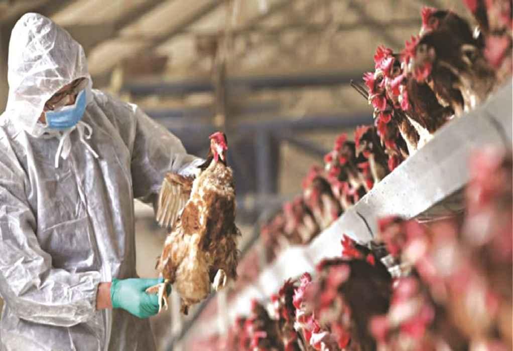 Κρούσματα γρίπης των πτηνών σε πτηνοτροφείο στην Βουλγαρία