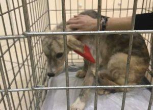 Ηγουμενίτσα: Ποινή φυλάκισης 15 μηνών για κακοποίηση σκύλου