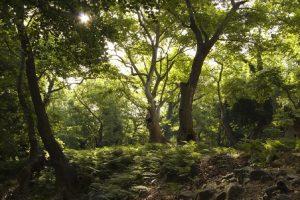 Natura 2000: Εκεί που «χτυπά» η καρδιά της φύσης