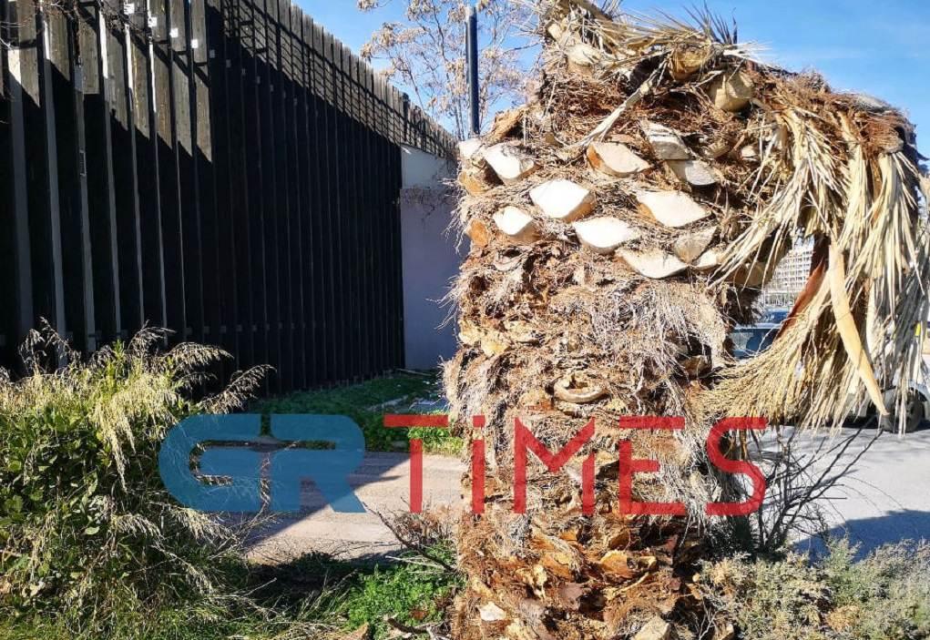 Το κόκκινο σκαθάρι ίσως αφάνισε τα μισά φοινικόδεντρα στην Ελλάδα (ΦΩΤΟ-VIDEO)