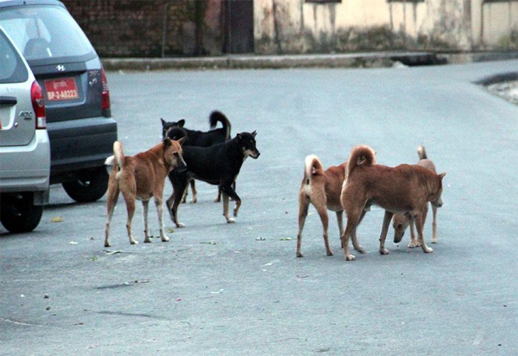 Θεσσαλονίκη: Έλεγχοι σε ιδιοκτήτες ζώων συντροφιάς
