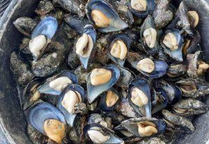 S.O.S. από τις υδατοκαλλιέργειες- μπροστά σε ολική καταστροφή