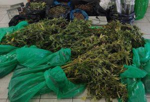 Πρώην αστυνομικός καλλιεργούσε χασίς