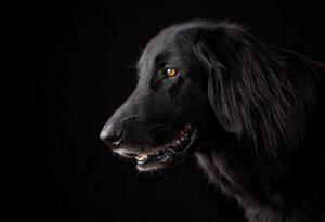 Θεσ/νικη: Προσοχή για επικίνδυνες αγέλες σκύλων στο Σέιχ Σου