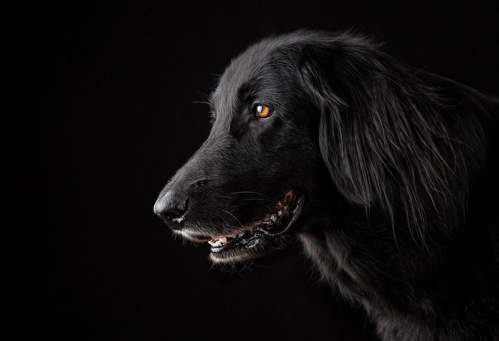 Ανακαλύφθηκε νέος κορωνοϊός σε σκύλους – Πόσο επικίνδυνος είναι για τον άνθρωπο