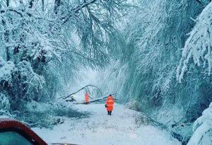 Κακοκαιρία: Πτώσεις δέντρων στο δήμο Αριστοτέλη (ΦΩΤΟ)