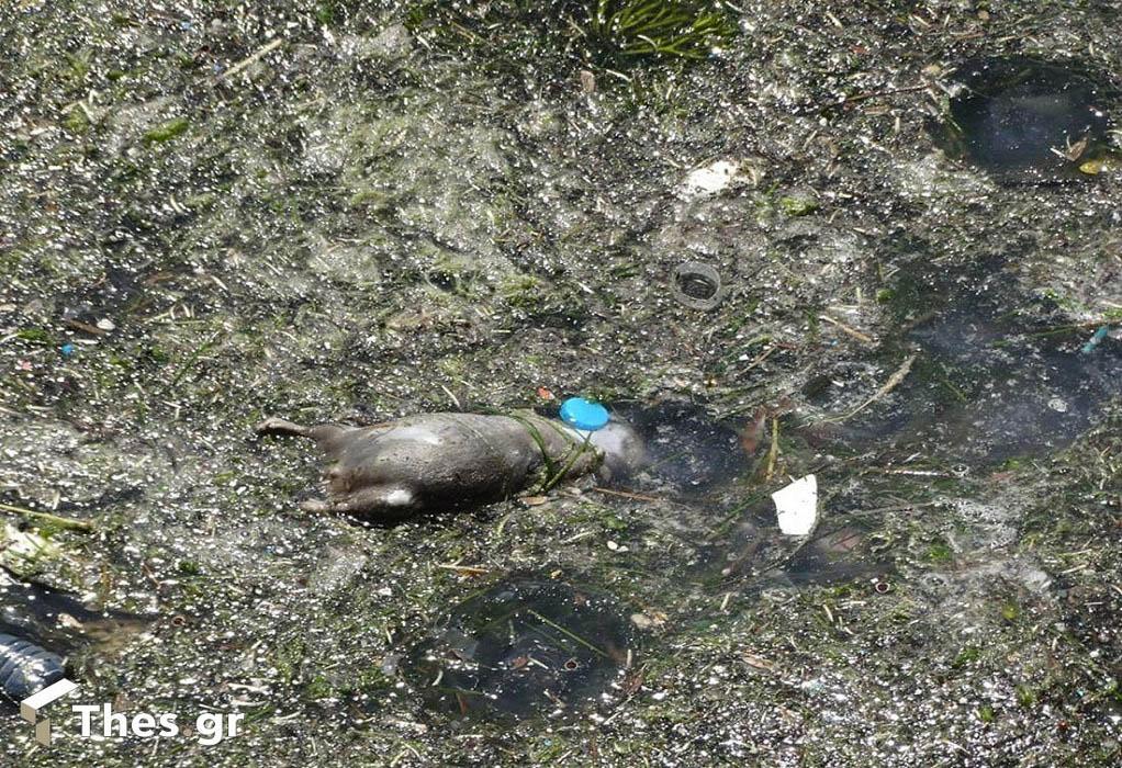 Θεσσαλονίκη: Σκουπίδια και τρωκτικά στον Θερμαϊκό