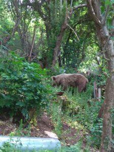 Καστοριά: Αίσιο τέλος για εγκλωβισμένο αρκουδάκι