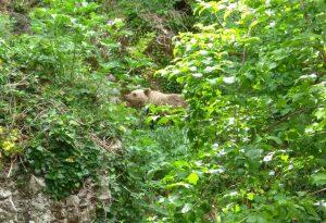 Αίσιο τέλος για ένα αρκουδάκι στην Εγνατία Οδό