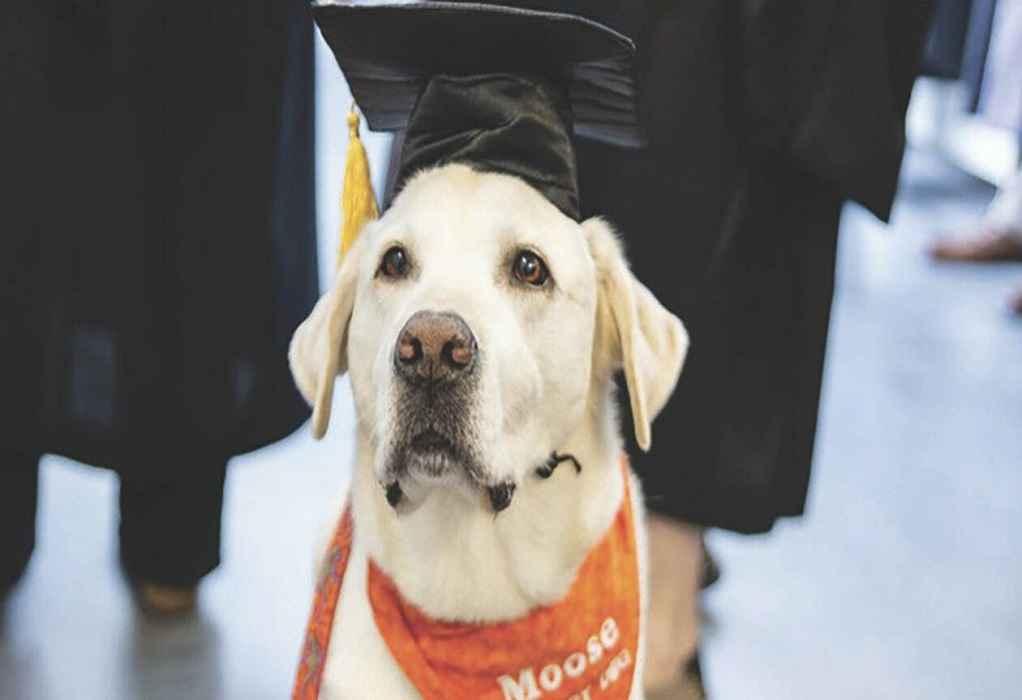 Ρόδος: Ζευγάρι κρέμασε τον σκύλο του-Αίσθηση προκαλεί η πρόταση του Εισαγγελέα