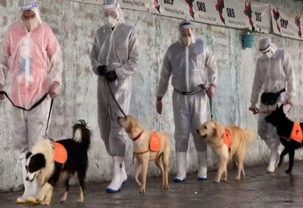 Εκπαιδεύουν σκύλους να ανιχνεύουν τον κορωνοϊό (VIDEO)