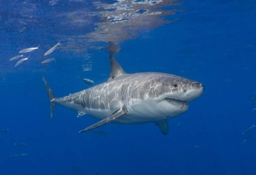 Από τα σαγόνια του… καρχαρία έσωσε τη γυναίκα του