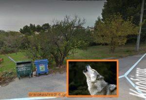 Λύκος «έκοβε» βόλτες στο Ωραιόκαστρο !