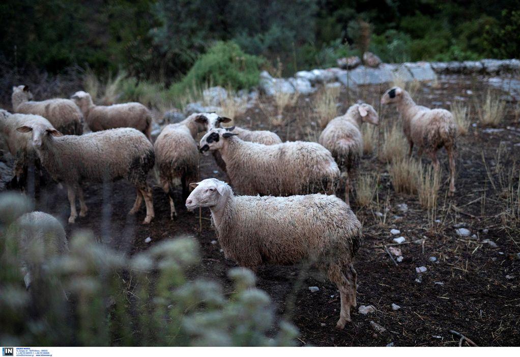ΣΕΚ: Αγρότες και κτηνοτρόφοι κινδυνεύουν να χάσουν επιδοτήσεις.