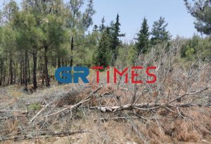 Πεύκα: Αγωνία κατοίκων για τα ξερά δέντρα στο Σέιχ Σου