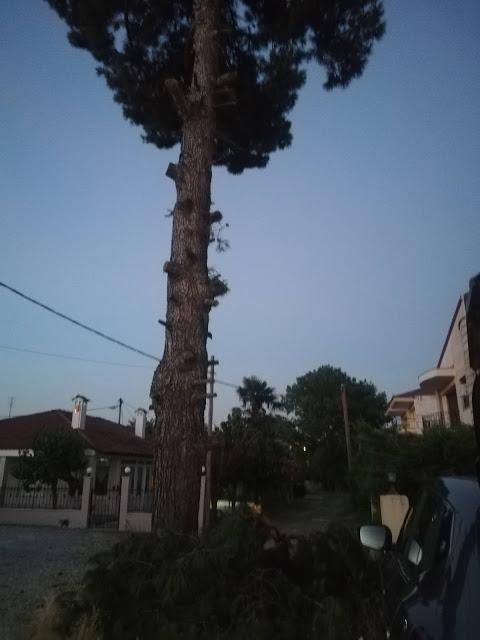 Ν.Μηχανιώνα: Κινδύνεψαν παιδιά από κλαδί δέντρου