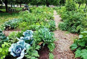 Φρέσκα λαχανικά από… πανεπιστημιακά χωράφια
