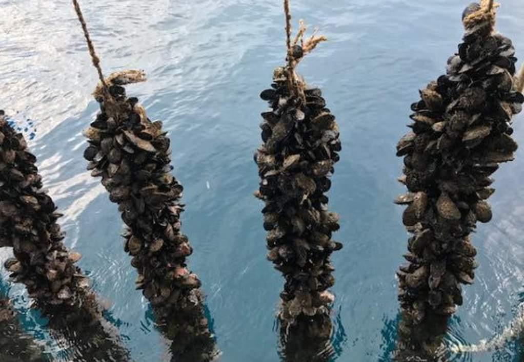 ΑΝΕΘ: Επιδοτούνται επενδύσεις σε αλιευτικό τουρισμό και υδατοκαλλιέργειες
