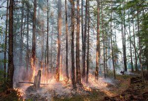 Σιβηρία: Ποσοστό ρεκόρ διοξειδίου του άνθρακα λόγω των πυρκαγιών