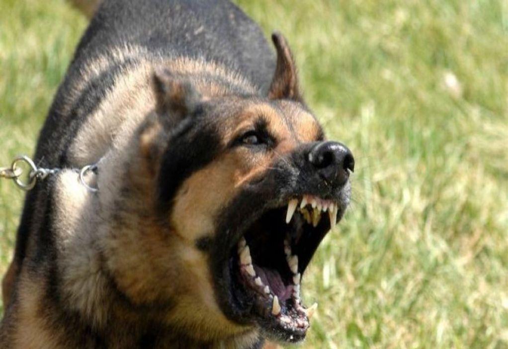 Νεκρό βρέφος από επίθεση σκύλου