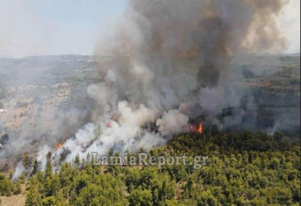 Λαμία: Σε δύο μέτωπα η πυρκαγιά στο Θεολόγο (VIDEO)