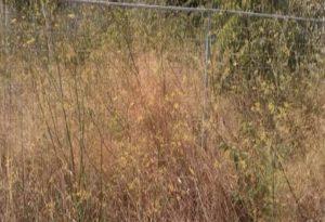 Σιθωνία: Έκκληση για καθαρισμό οικοπέδων από ξερά χόρτα