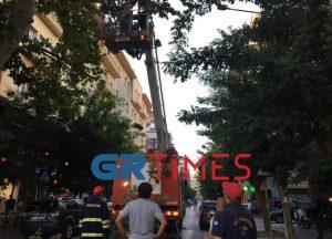 Ολοκληρώθηκε η επιχείρηση «εκκαθάρισης» του δέντρου της Βενιζέλου (ΦΩΤΟ-VIDEO)
